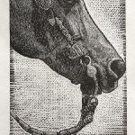 I LIke Big Buckles and I Cannot Lie,  Limited Edition Wood Engraving $45