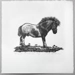 "Pony for Christmas Limited Edition Wood Engraving 3"" x 4"" print image $40"
