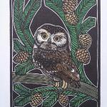 Northern Saw-Whet Owl Limited Edition Wood Engraving and Watercolor $45