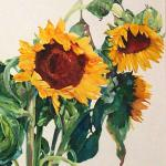 Sunflowers 30 x 22 Watercolor on Aquabord $1900