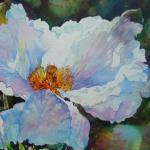 White Poppy 11 x 14 Watercolor on Aquabord $750