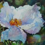 White Poppy Watercolor